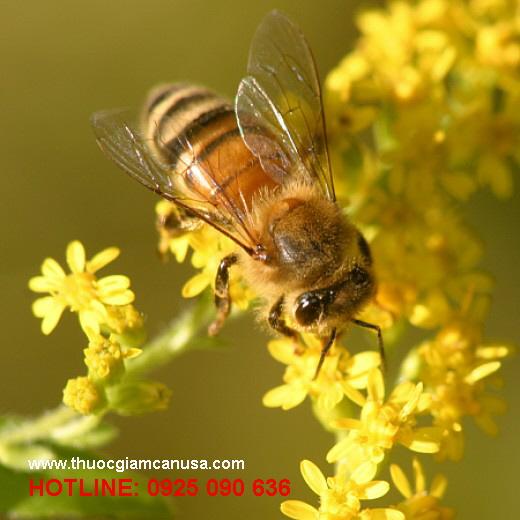 Sữa ong chúa Nature's King, sua ong chua chat luong tuyet hao cua Uc